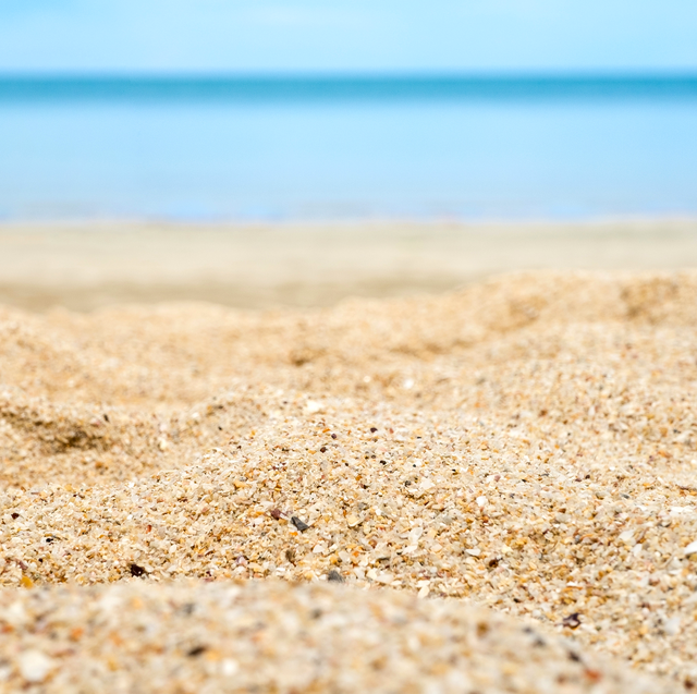 White And Brown Seashells Beach Sand Ocean Seashell Ocean Beach Transparent Background Png Clipart Beach Illustration Transparent Background Beach Sand