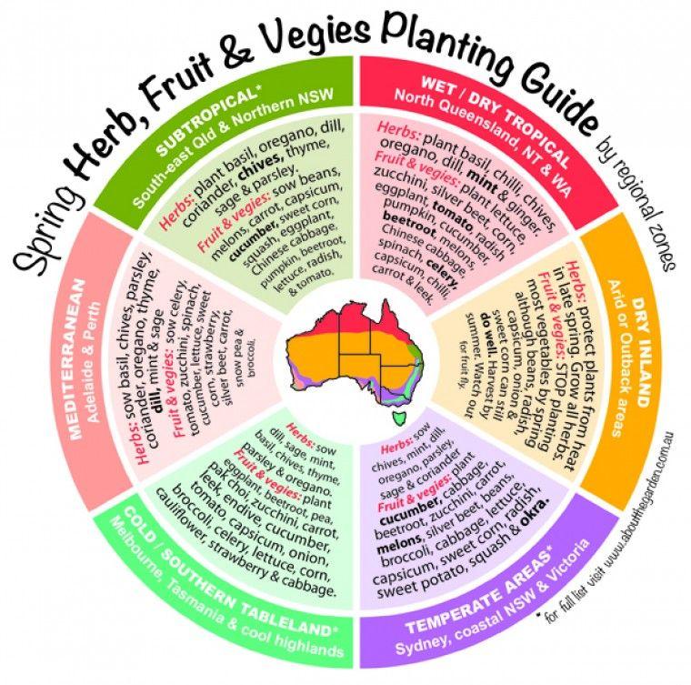 Infographic Spring Herb Fruit Vegies Planting Guide Flower