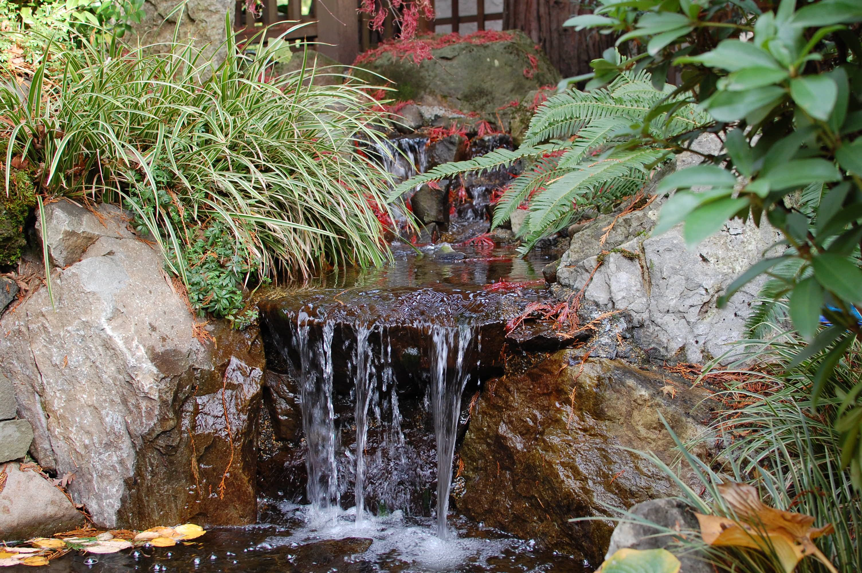 Low maintenance landscapes for portland low maintenance for Backyard pond maintenance