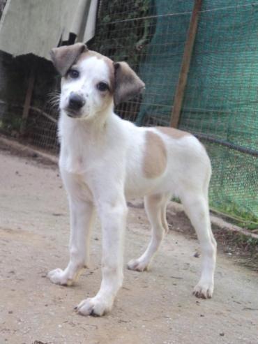 Hund Welpe K A Mischling Hundin 4 Monate Hunde Welpen