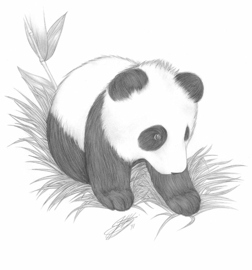 Pin by kylisha williams on animal pencil drawings panda drawing