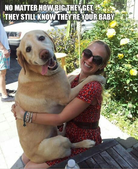 16 scenarios that ALL dog owners will be able to relate to! #dogs #pups #lovedogs #lol #cute #pets