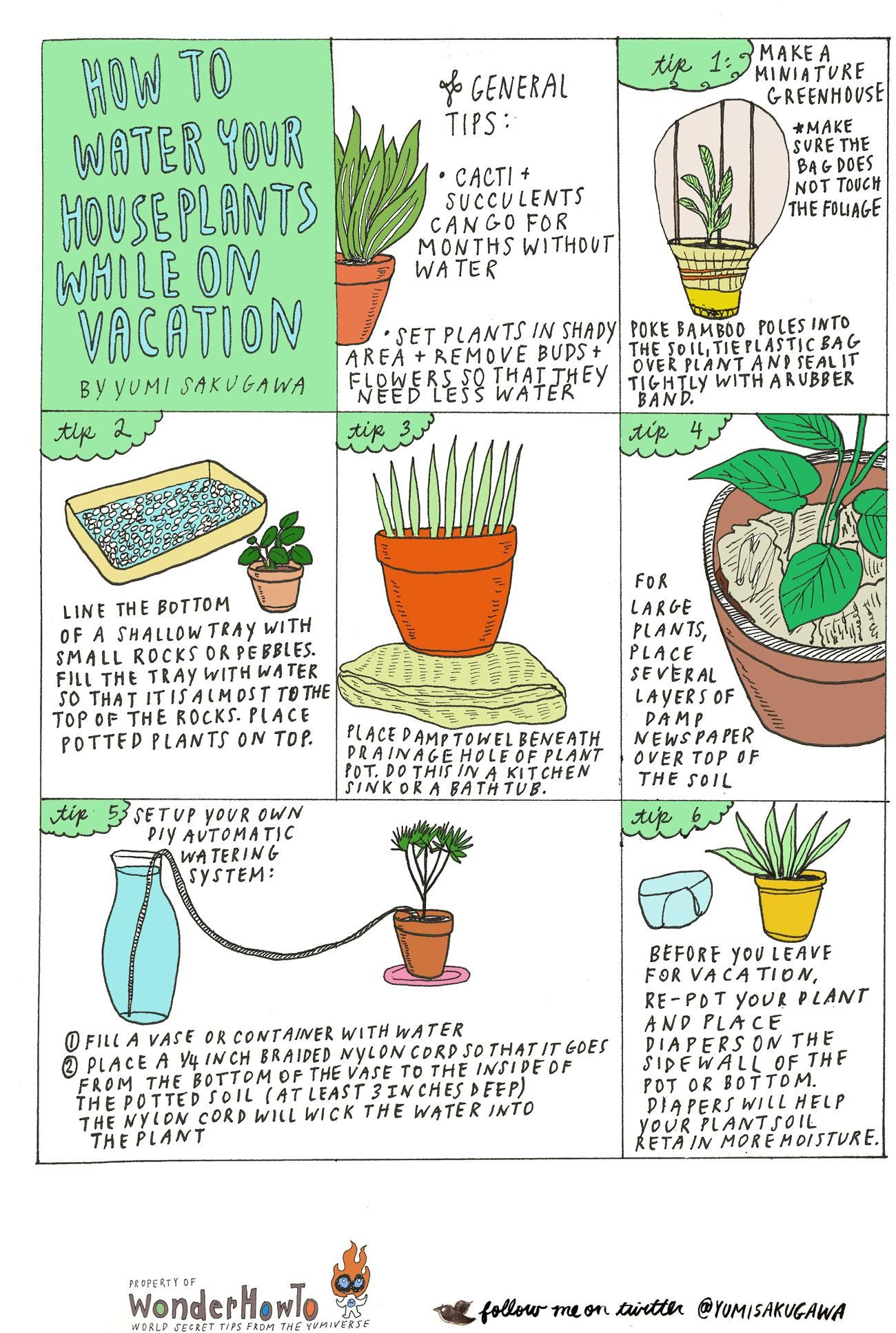 6 Diy Tips For Watering Your Houseplants While Away On Vacation Plants Water Plants Houseplants