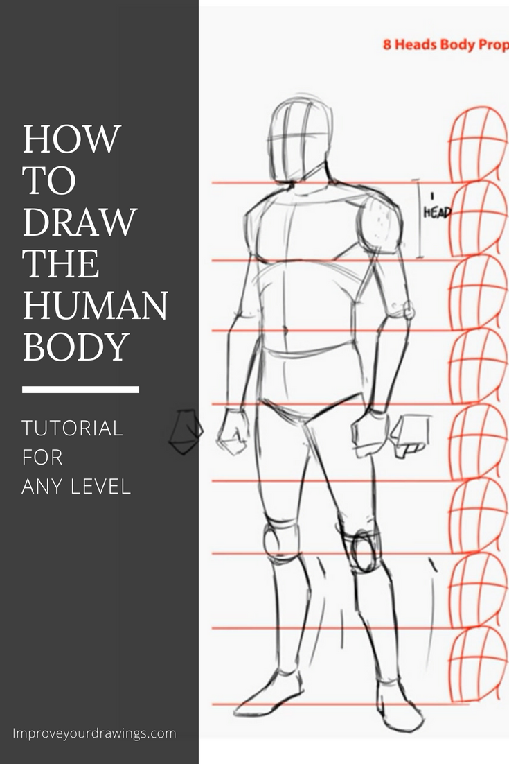 Figure Drawing Reference Human Sketch Figure Drawing Human Body Drawing