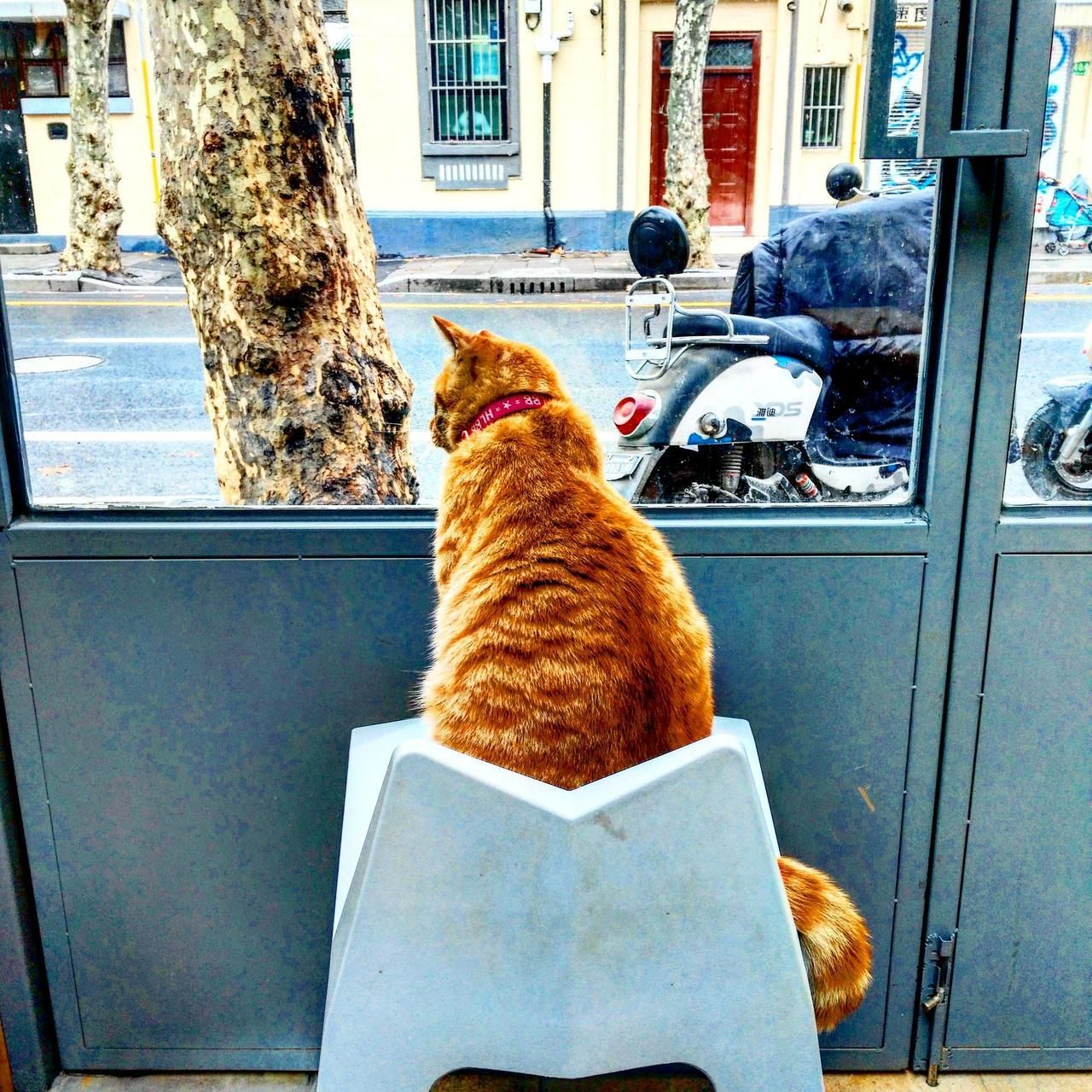 They Move A Chair To The Window For This Cafe Cat To Watch The World Go By By Hadherses Cats Kitten Catsonweb Cute A Cats And Kittens Sleepy Animals Cat Lounge