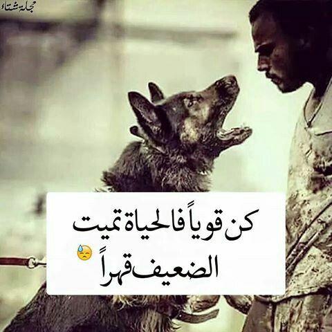 كن قويا فالحياه تميت الضعيف قهرا Joker Quotes Arabic Quotes Cool Words