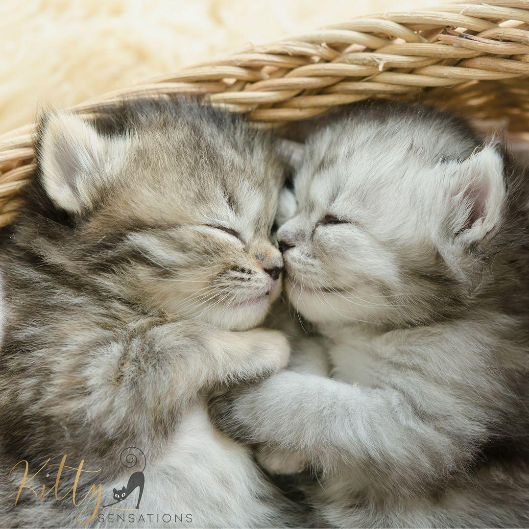 KittySensations (kittysensations) • Instagram Two tiny