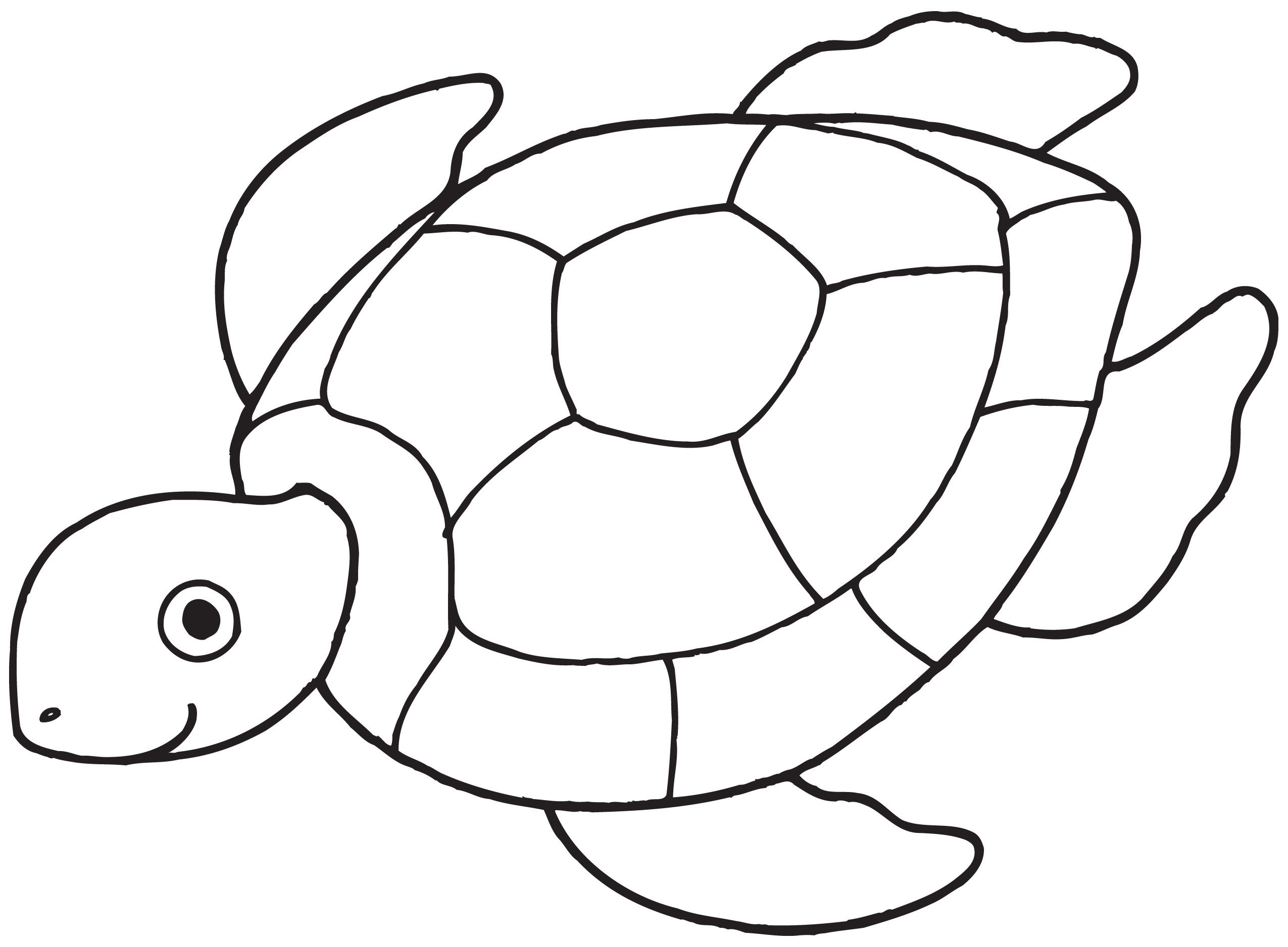 Turtle Coloring Pictures For Preschool You'll Love