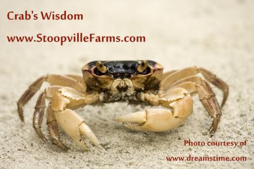 Shaman Crab's Wisdom