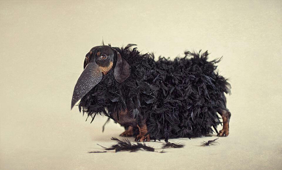 Like a bird Lion sculpture, Dachshund, Birds