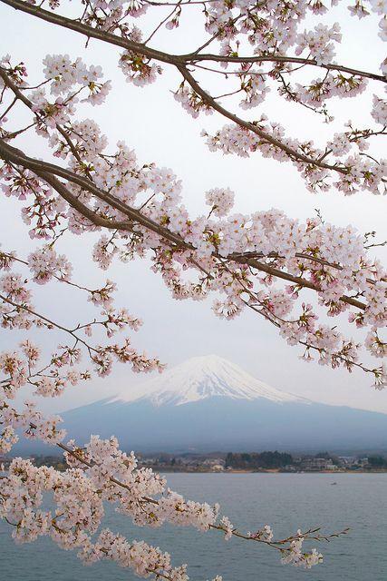 Mt Fuji And Sakura Japan Beautiful Nature Mount Fuji