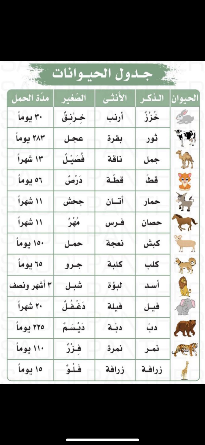 Pin By Wedyan Wedyan On معلومة Word Search Puzzle Words Word Search