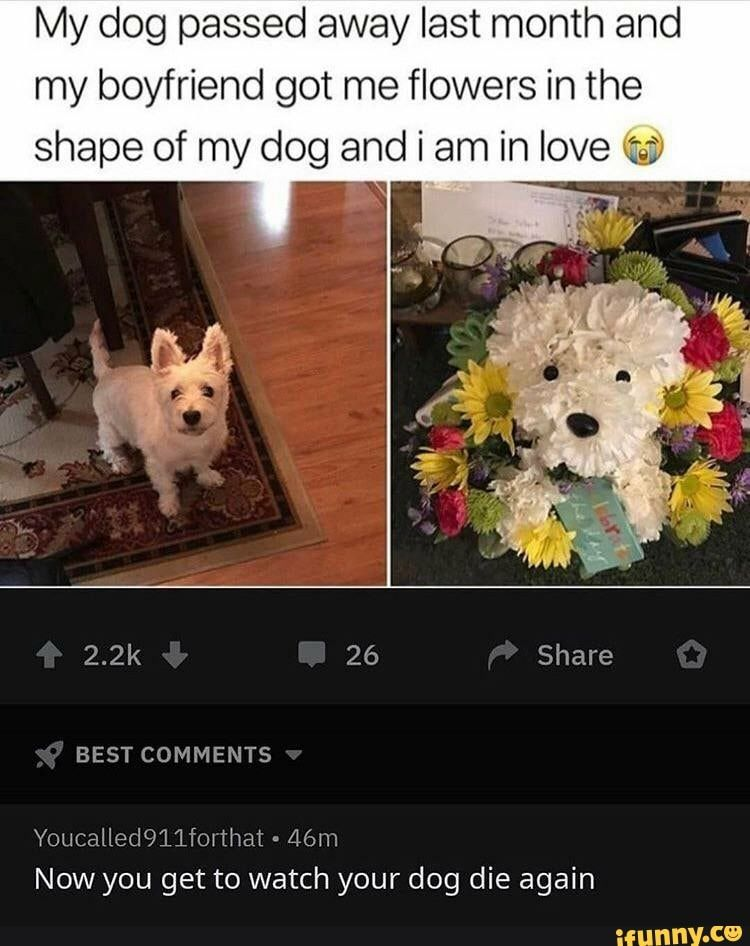 My Dog Passed Away Last Month And My Boyfriend Got Me Flowers In The Shape Of My Dog And I Am In Love Youcalledqllfm That Lam Now You Get To