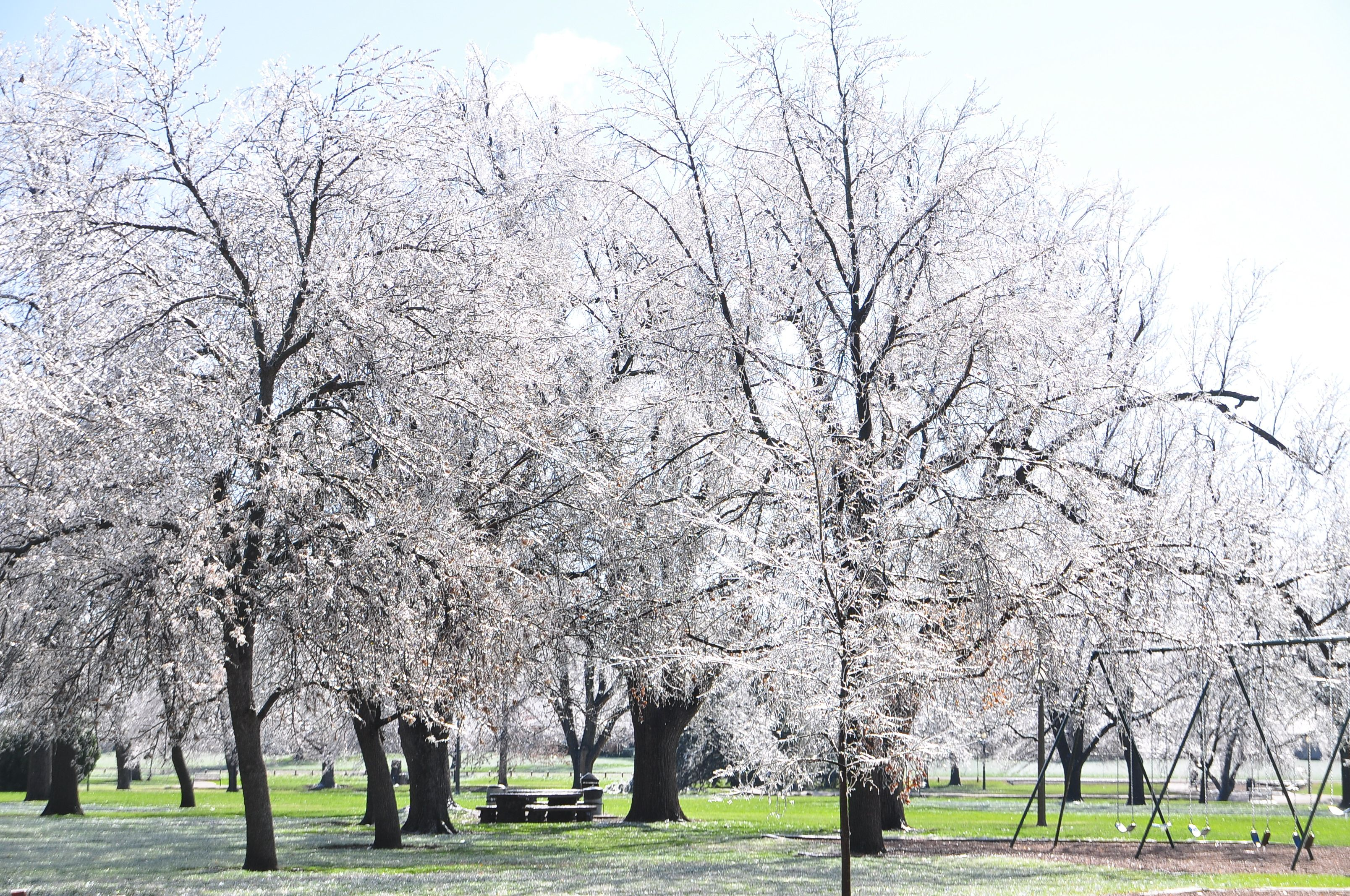 This picture almost captures the spectacular glistening taking place in Lakeside Park this morning.