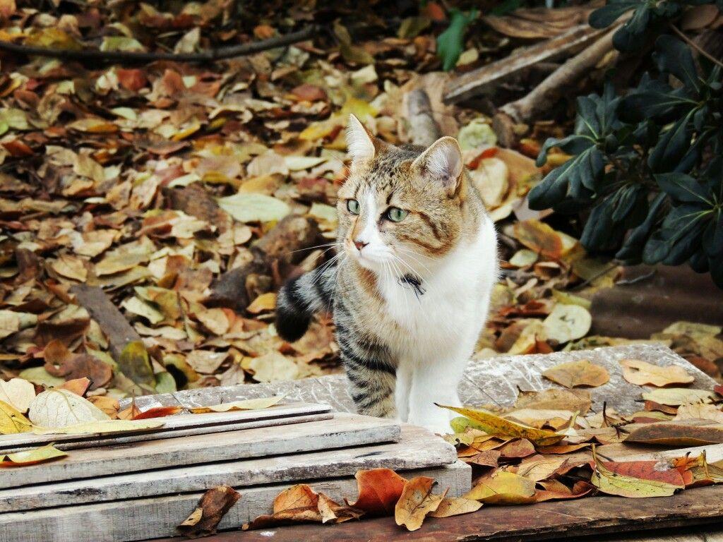 Felipe en otoño