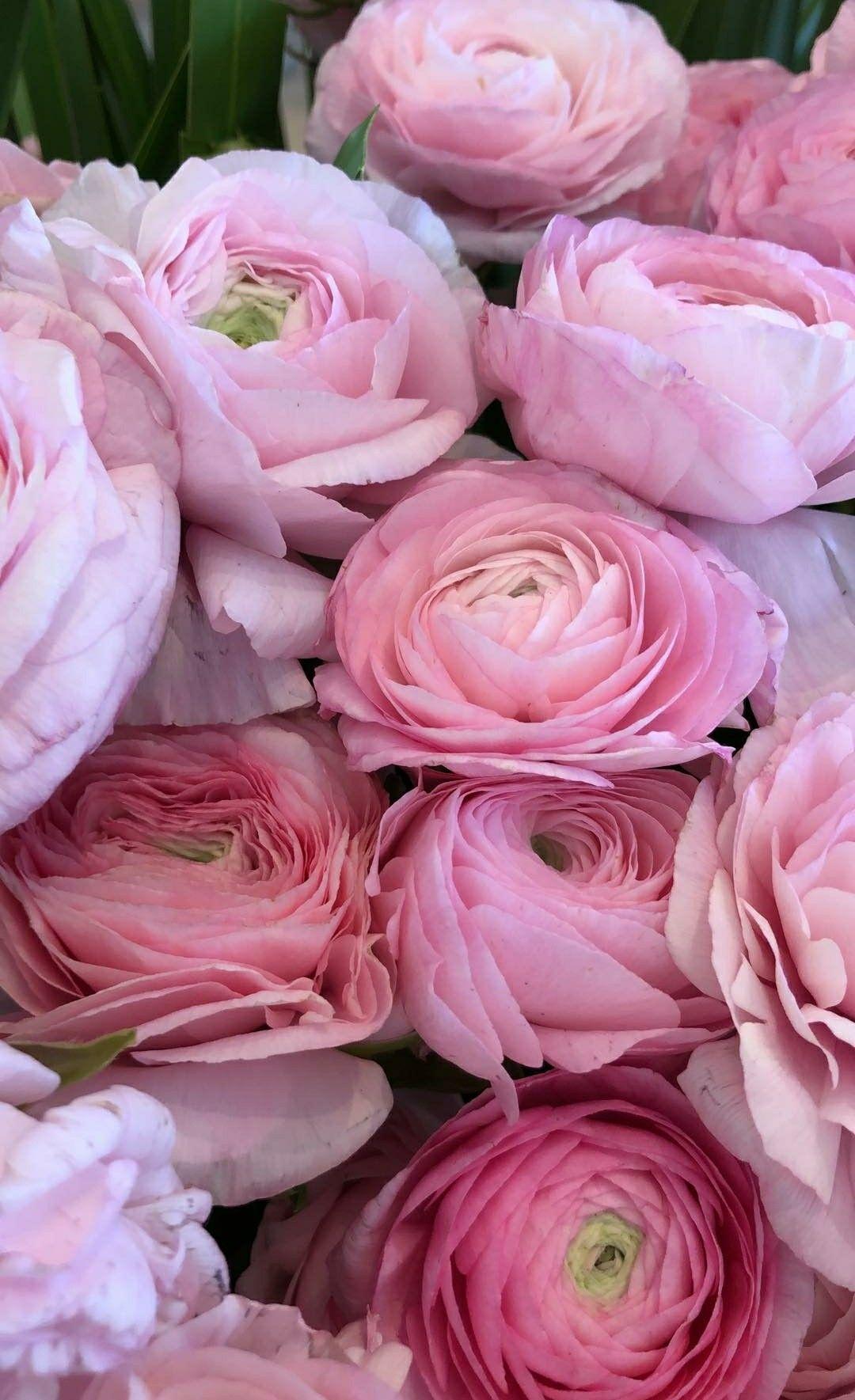 Bialy Krokus Tapeta Na Telefon Beautiful Flowers Flowers Dandelion