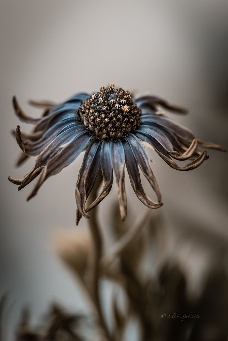 All The Pretty Flowers January 7 2016 Pinterest Autumn Flowers