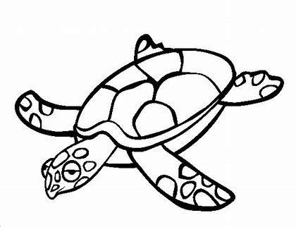 free printable turtle templates  bing images  turtle coloring pages animal coloring pages