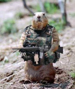 Pin on be careful with the gun in your golf club bag timmy - Pictures of funny animals with guns ...