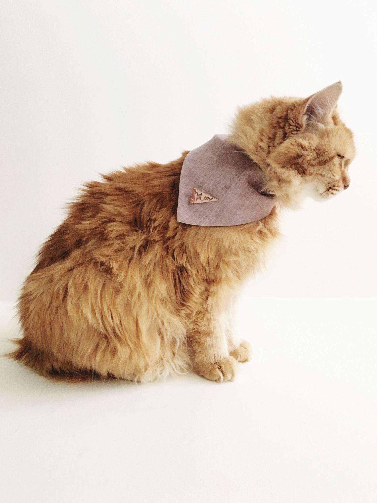 Diy Bandana For Your Cat Siamese Social Club Cats Cat Collars How To Tie Bandana