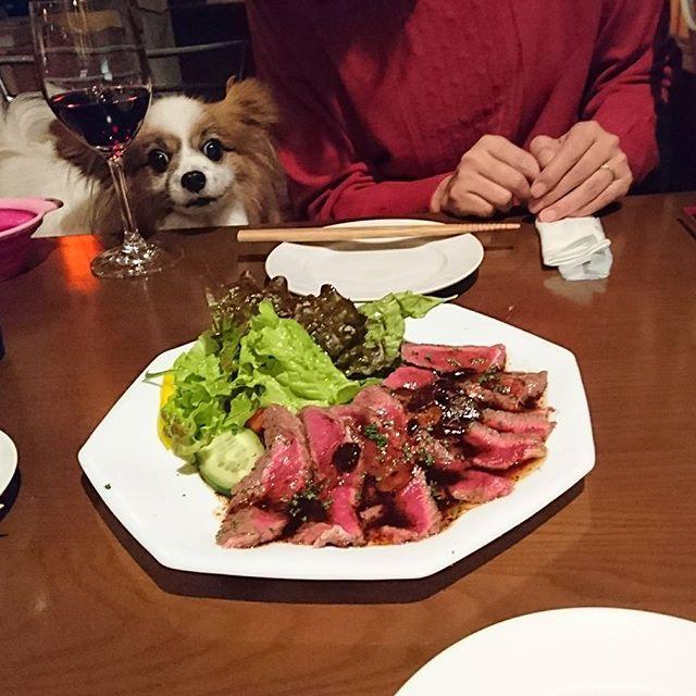 4ヶ月ぶりにブログを更新したらしいでしゅよ #パピヨンパパの愛犬と幸せに暮らすコツ #いぬ #犬 #パピヨン #アリア #ブログ #ブログ更新 #dog #papillon #バー #バル #バルゴリラ #bargorilla #bar #肉 #神奈川県 #藤沢 #藤沢駅