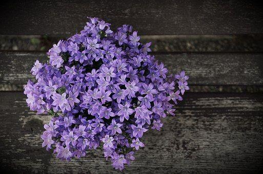 Układ, Niebieskie Kwiaty, Kwiat