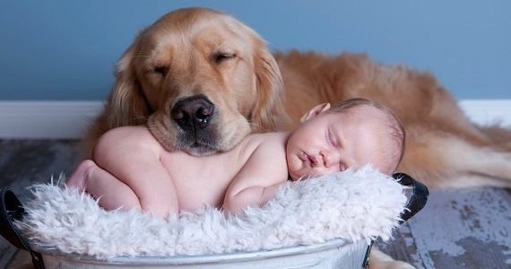Dogs Who Love Their Human Babies Like Their Own Dogs Kids Dogs