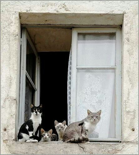 Pin By Rotten On El Gato Cat Gatto Cats Crazy Cats Cat Lounge