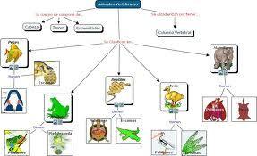 Clasificación Del Reino Animal Clasificación De Animales Vertebrados E Invertebrados Clasificacion Del Reino Animal