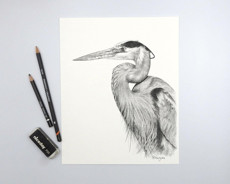 Original Heron Bird Pencil Drawing Great Blue Heron Wall Art
