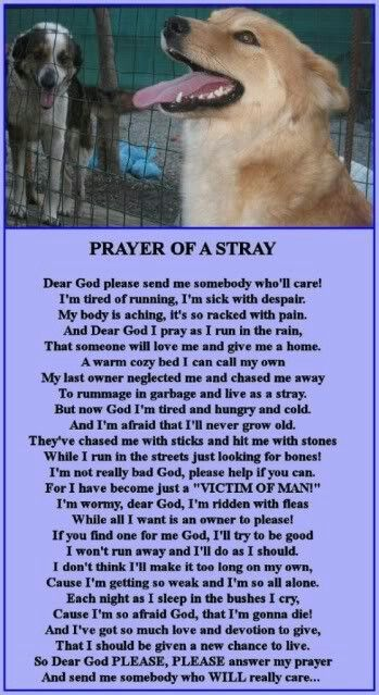 Happy Holidays. Hopefully you and your furbaby are safe and sound inside. But some are out roaming the streets or others are sitting in cages waiting for thr right person. Give a stray a home for the Holidays and answer thier prayer