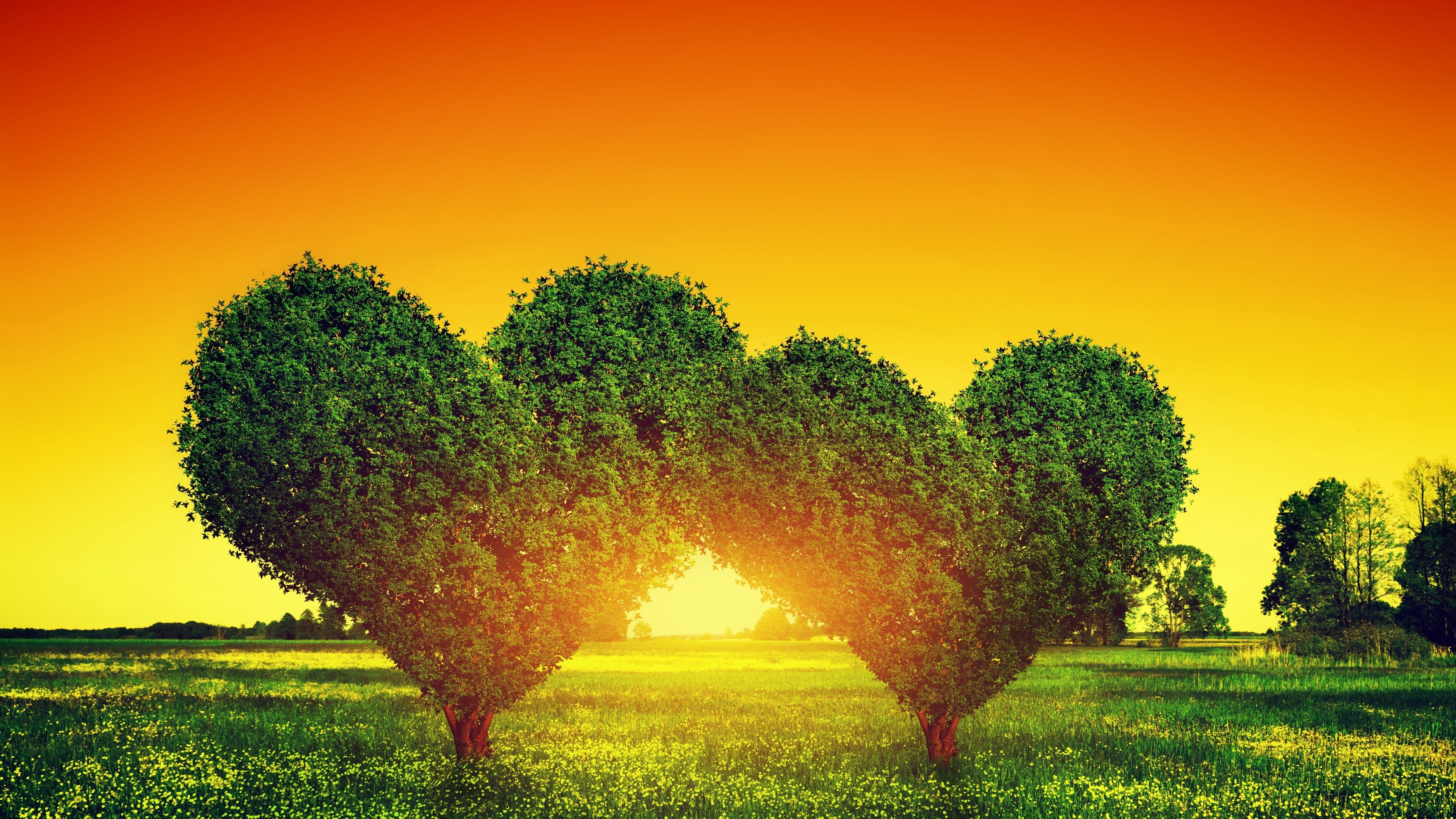 Two love hearts trees, grass, sunset wallpaper 3840x2160 UHD 4K