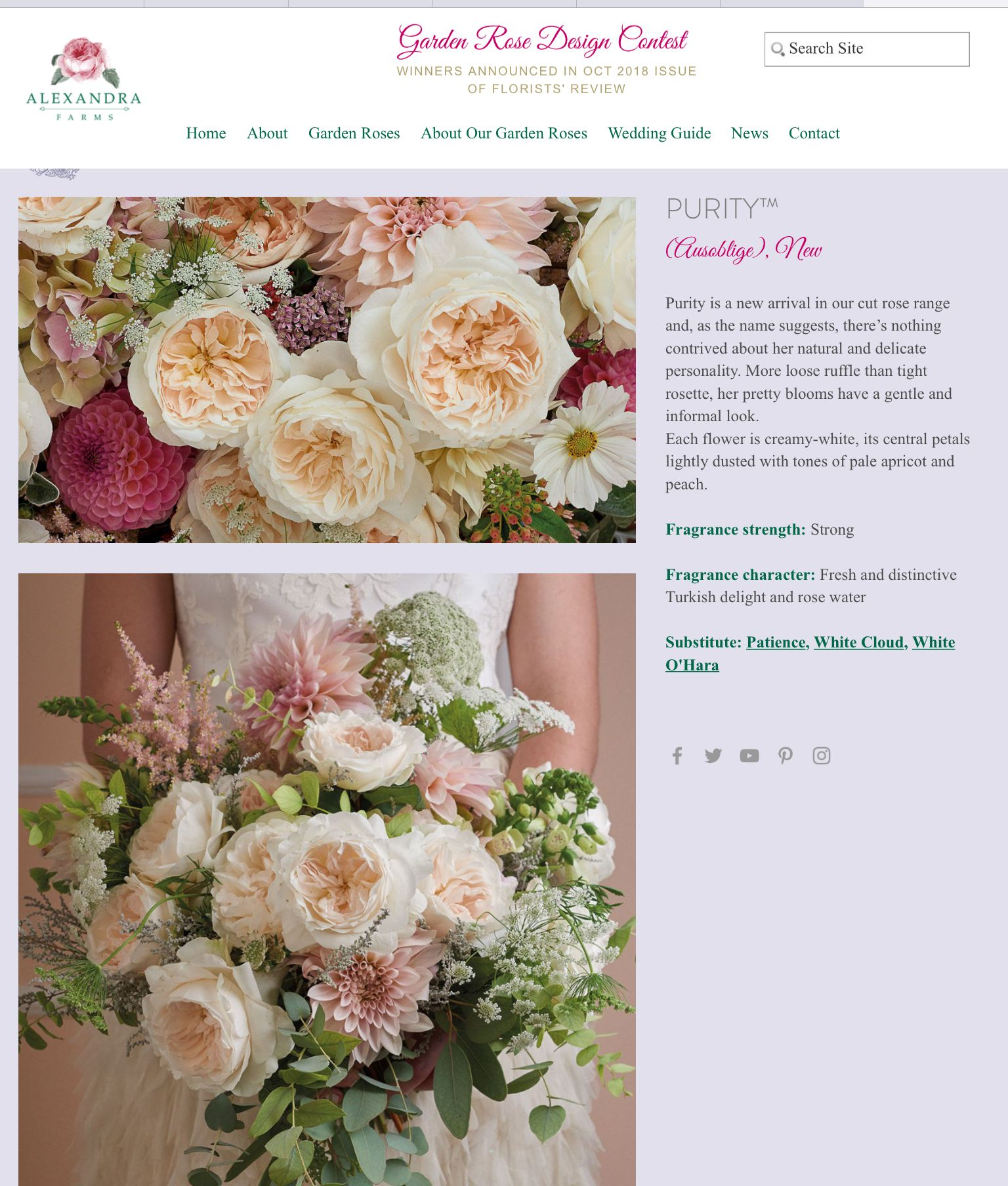Pin By The Lilly Hunter On Flower Type Choices Pinterest Flower