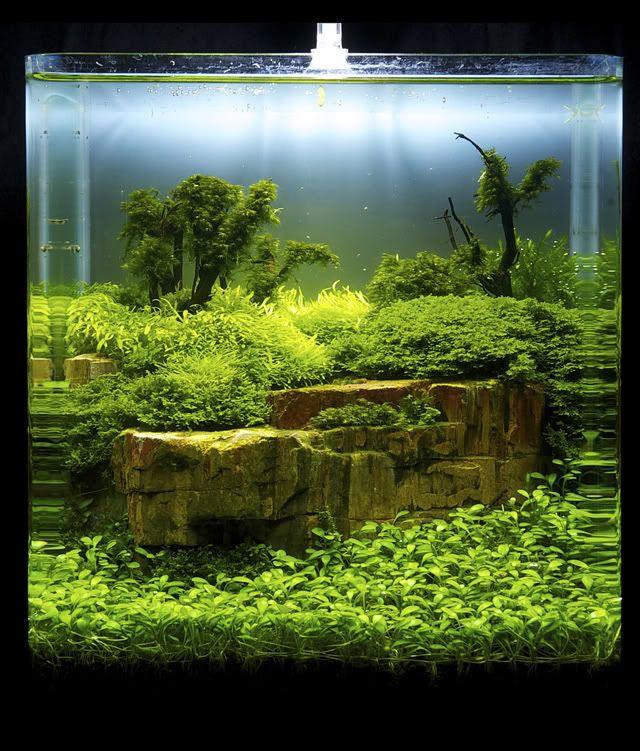 Aquascaping Magazine: Great Path Aquascape Aquascape T Aquarium Nature