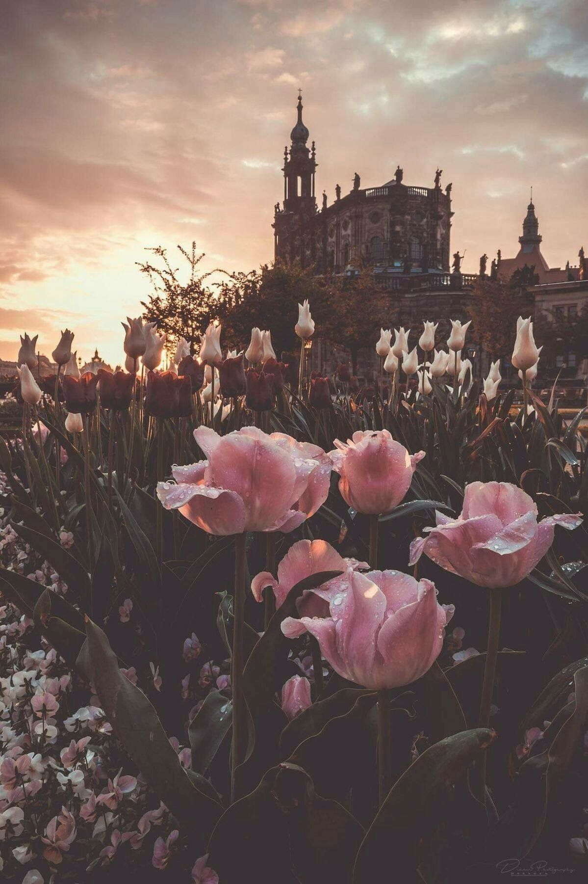 Pin By Alexis Sullivan On Cute Things And Places Landscape Wallpaper Beautiful Wallpapers Nature Photography Aesthetic pink wallpapers top free aesthetic pink. landscape wallpaper