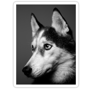 Siberian Husky Stickers Broken Concrete Husky Dog