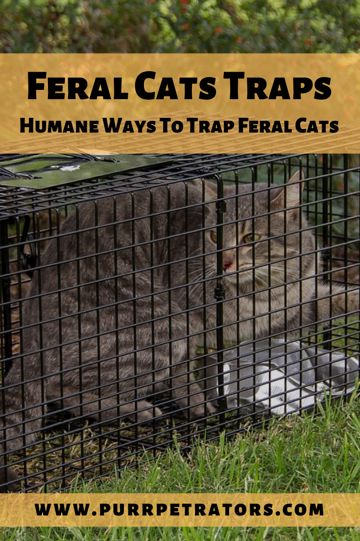 Feral Cats Traps Humane Ways To Trap Feral Cats (With