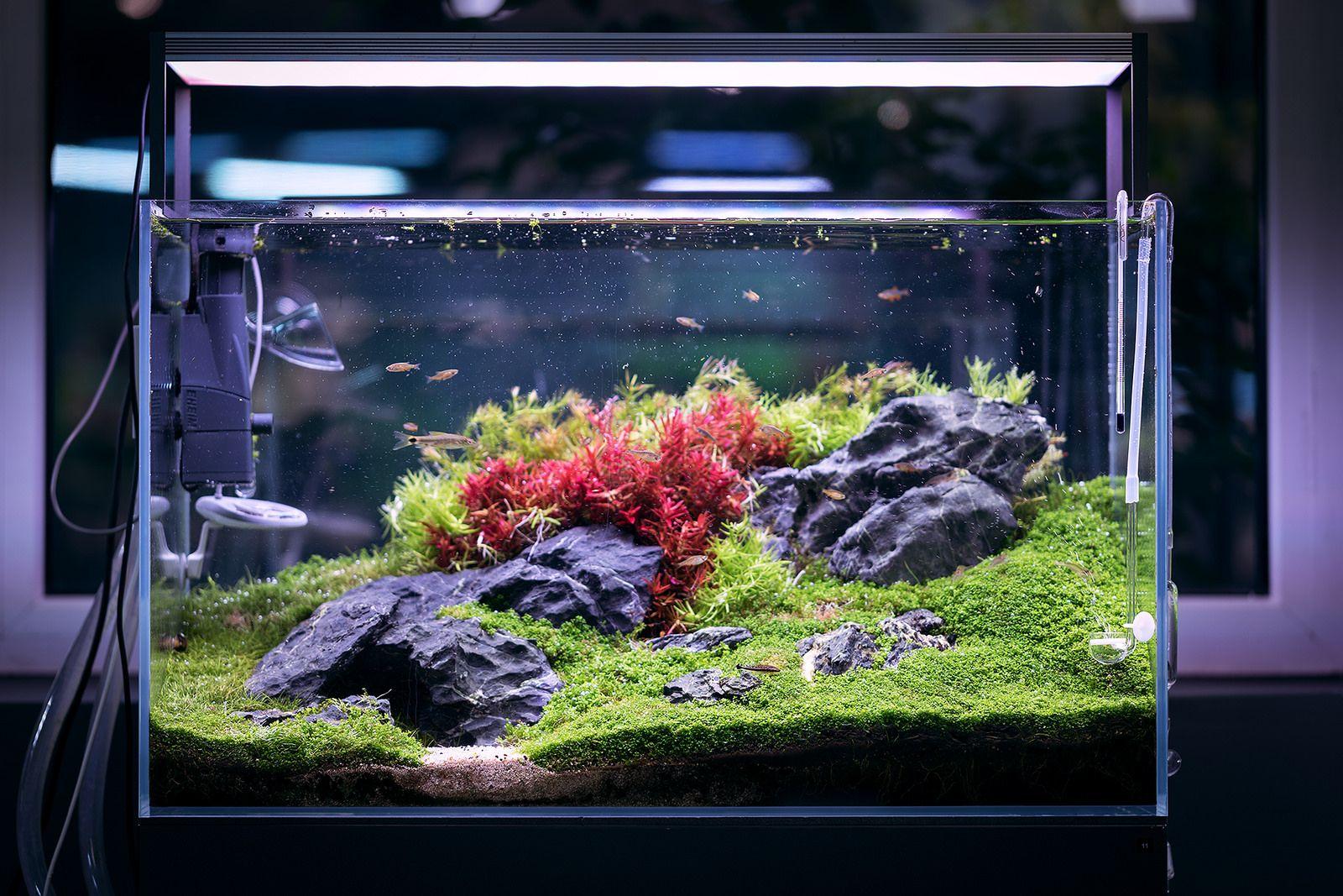 Gren Aqua Showroom Budapest Aquarium Landscape Aquarium Design Planted Aquarium