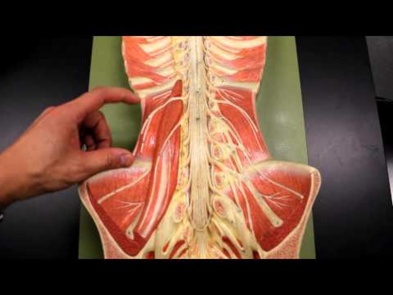 Abdominal Muscles Fatigue
