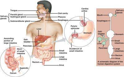 Hcv new drug research abdominal pain rightleft upper quadrant hcv new drug research abdominal pain rightleft upper quadrant ccuart Images