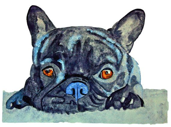 How cute am I now give me the cookie - giclee prints A3 or A4