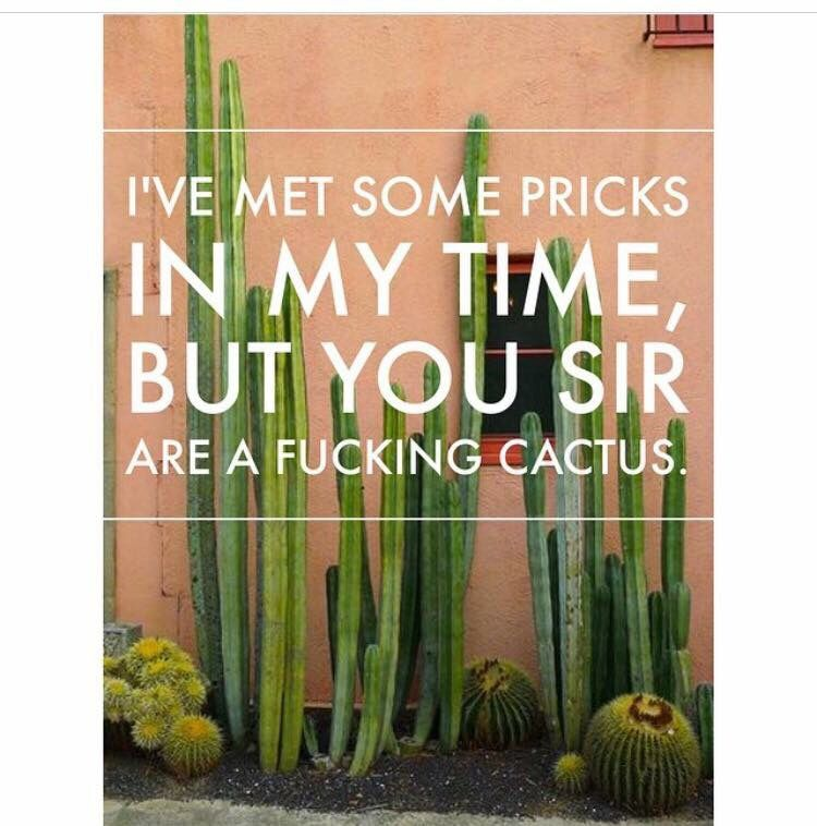 Cactus best quotes cactus no time for me