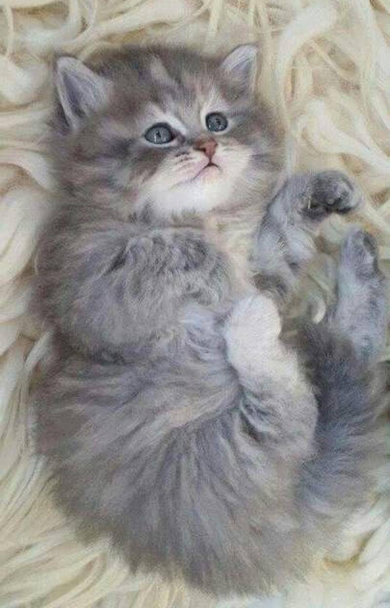 Super Cute Kitten 7th October 2016