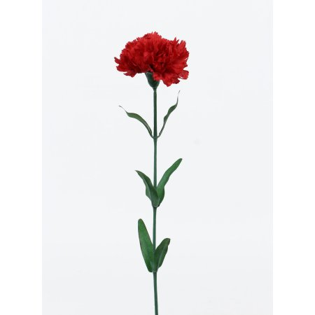 Home In 2020 Red Carnation Carnations Summer Collection