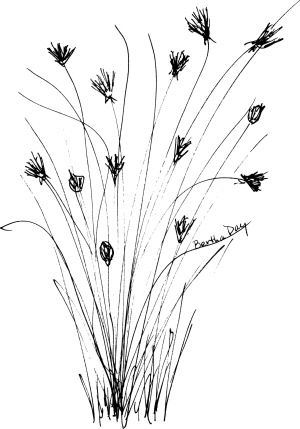 Wildflower Black And White Clipart With Images Wild Flowers