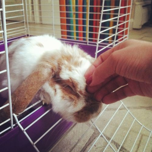 Bunny will accept head scratches