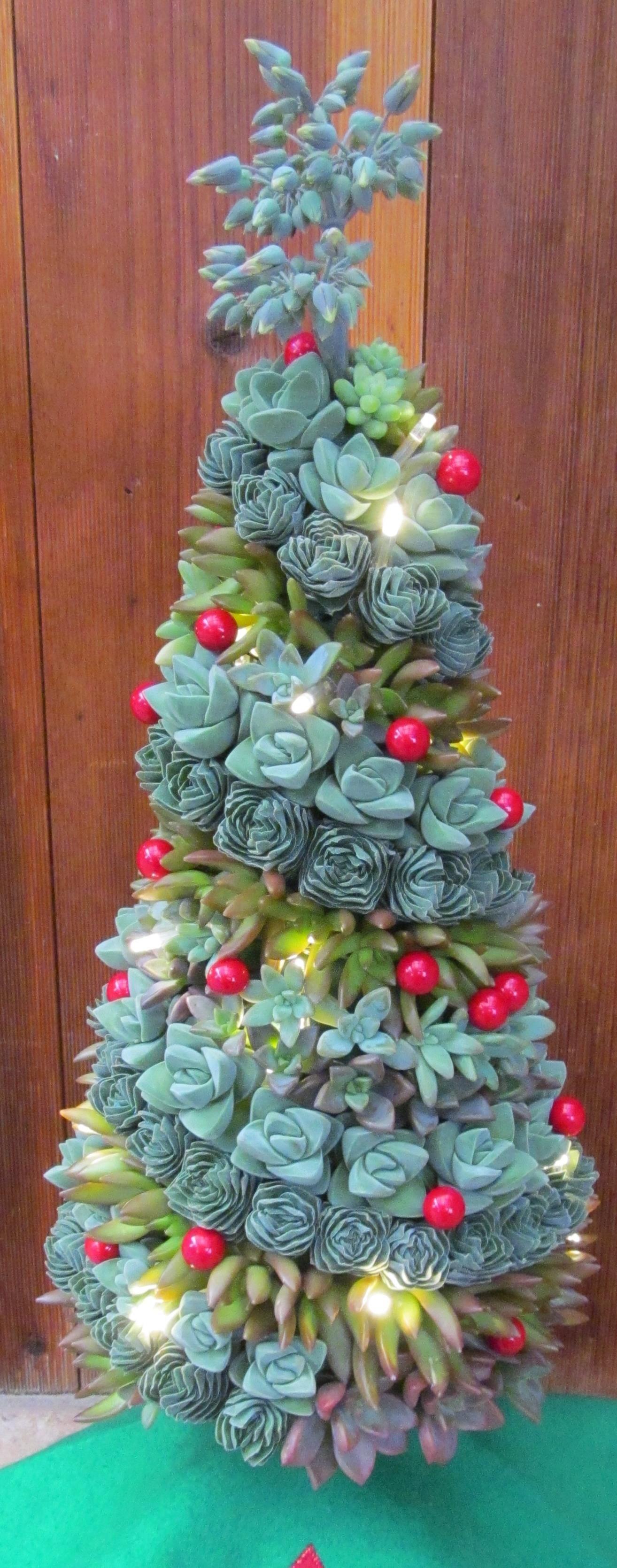Holiday Tree Succulents, Plants, Succulents garden