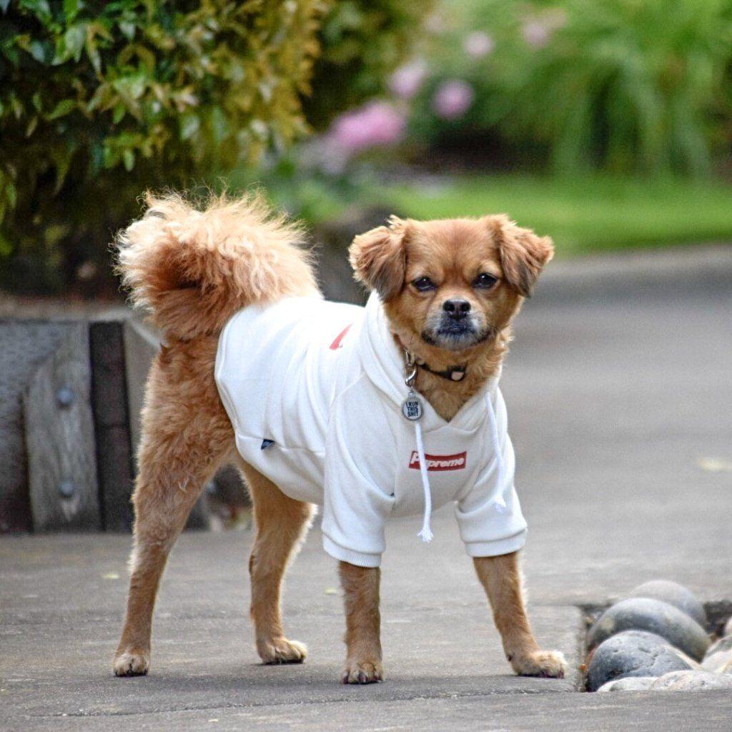 Pupreme Dog Hoodie - White | dog gets dressed  | Dog hoodie