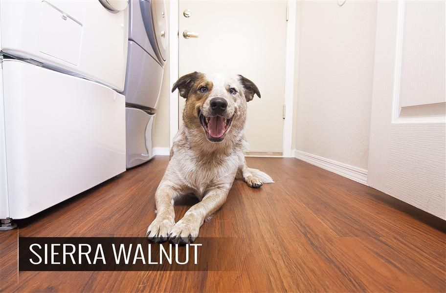 What S The Best Flooring For Dogs We Ve Gathered Top 5 Dog Friendly