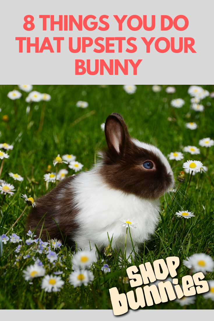 8 Things You Do That Upsets Your Bunny Animals Pets Pet Care